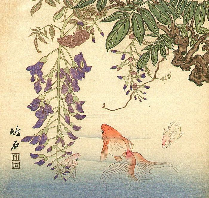 Zhang Sicong золотая рыбка
